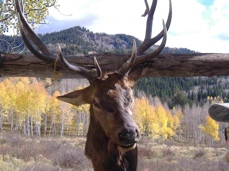 Colorado Elk Hunt